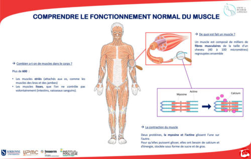 Diffusion des savoirs - fete de la sciences - poster - comprendre le fonctionnement normal du muscle