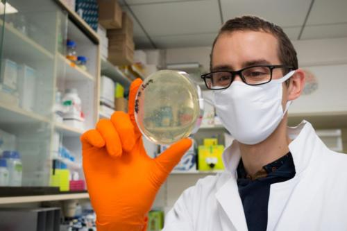 Michel, ingénieur de recherche, examine des colonies bactériennes transformées par un ADN recombinant