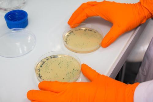Élaboration d'ADN recombinant par génie génétique
