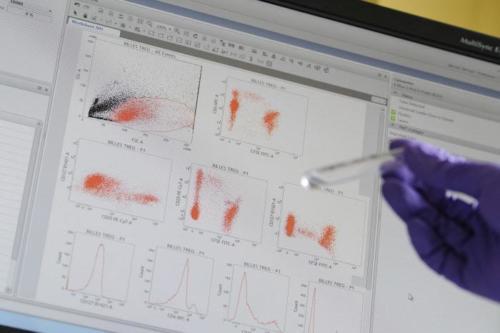 Echantillon pour l'analyse de thymocyte humain afin de comprendre le phénomène de dérégulation des cellules T et réaliser une cytométrie en flux (CMF)
